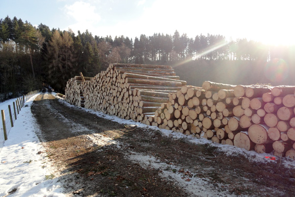 Birrerholz Holzernte