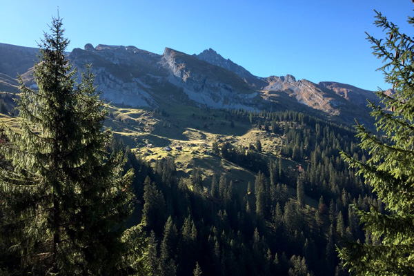 Birrerholz-Umwelt-Wald-Schweiz
